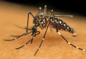 Causes of Chikungunya?