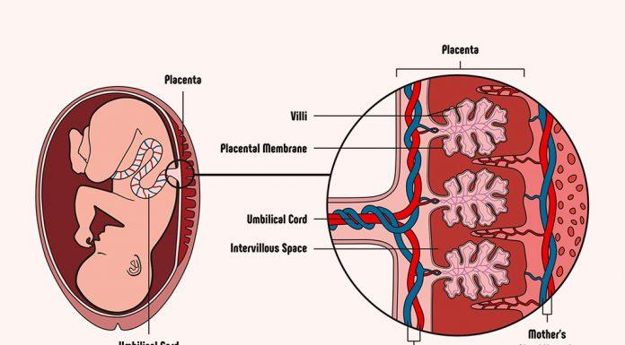 Anterior Placenta during Pregnancy
