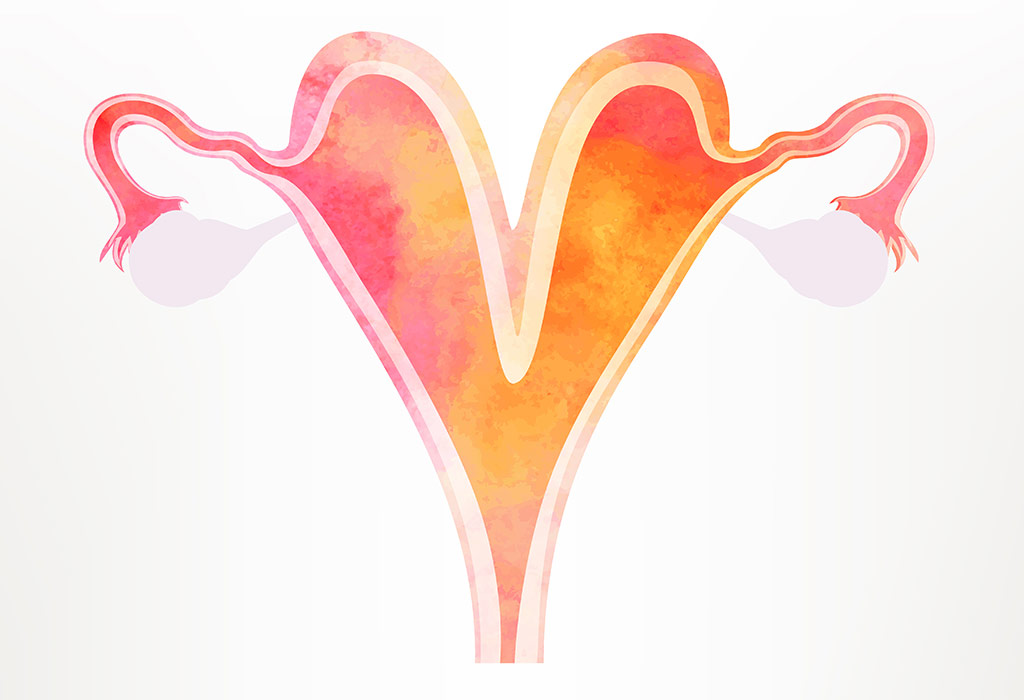 Bicornuate Uterus – Reasons, Signs & Treatment