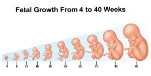 Pregnancy Body Changes – Week 1 to Week 42