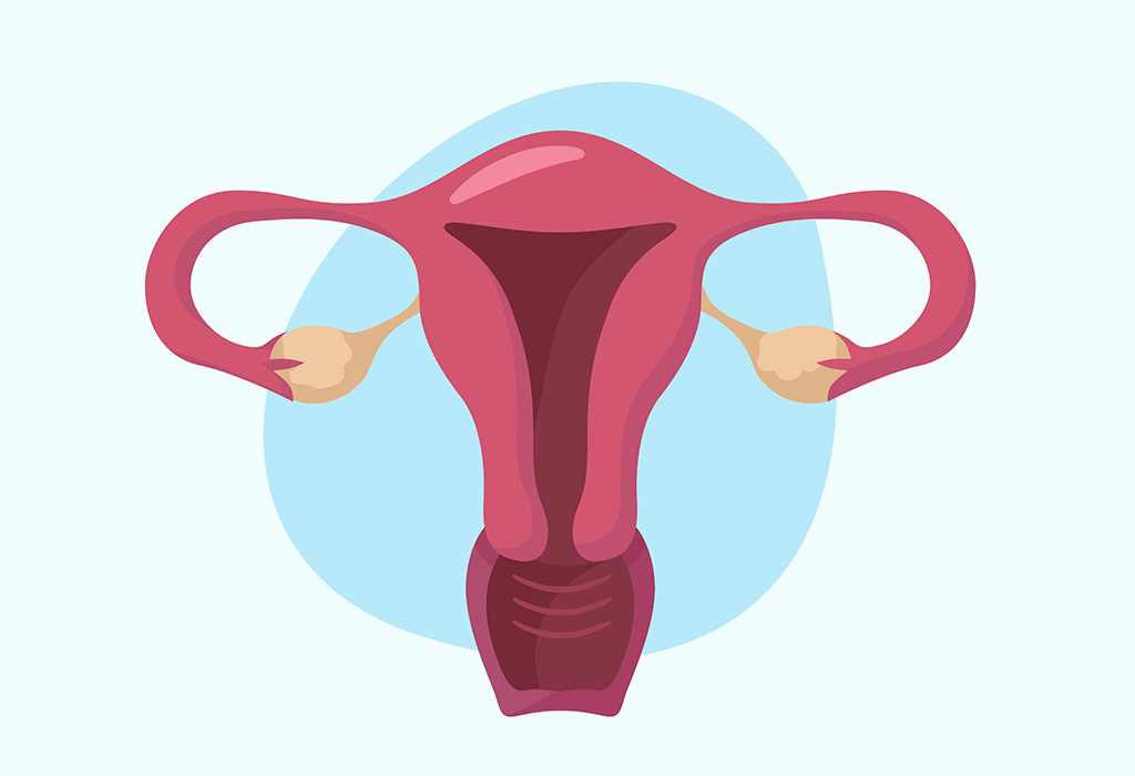 Uterus in Pregnancy - Functions, Position, Size & more