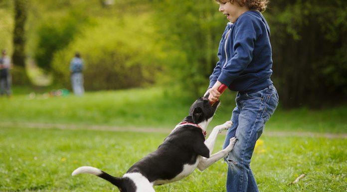 Dog Bites In Children