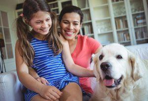 encouraging gentle behaviour towards dogs