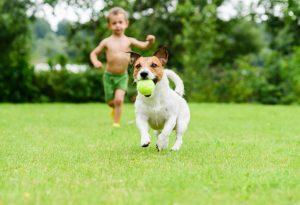 Help your kids organize a dog show