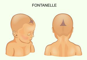 location of fontanelles on baby's head