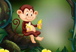 monkey eating bananas