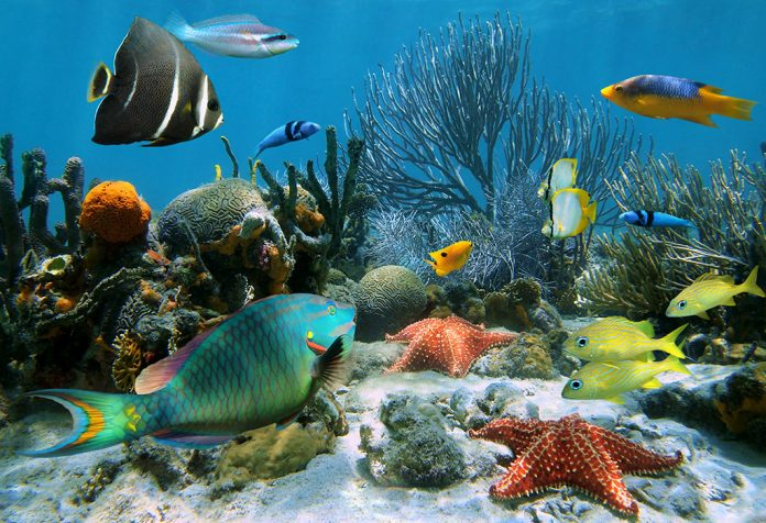 Interesting and Educative Aquatic Animals Information For Kids