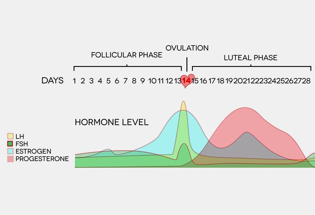 Changes in hormonal levels during luteal phase