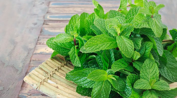 Is Consuming Mint during Pregnancy Safe?