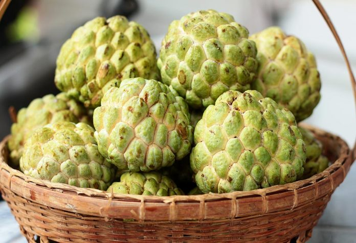 Eating Custard Apple (Sitafal) in Pregnancy
