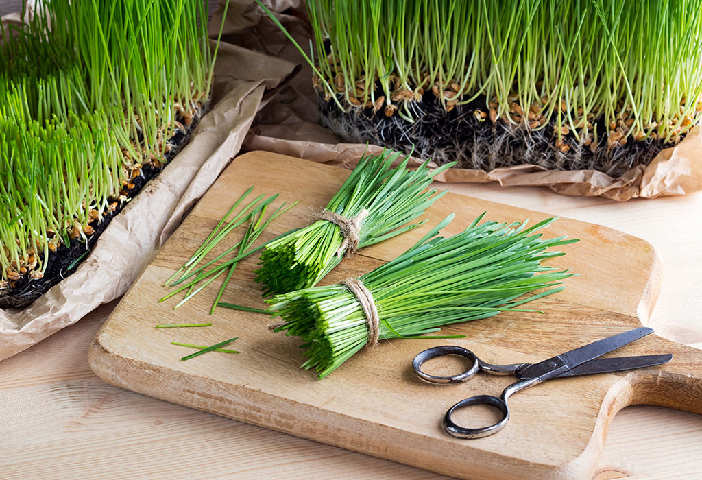 Image result for Take Wheatgrass