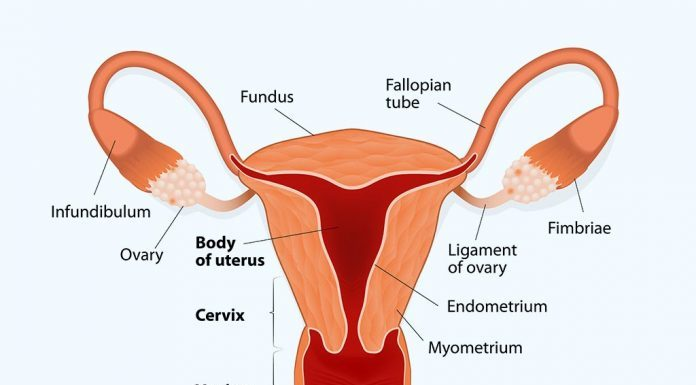 Endometrial Thickness