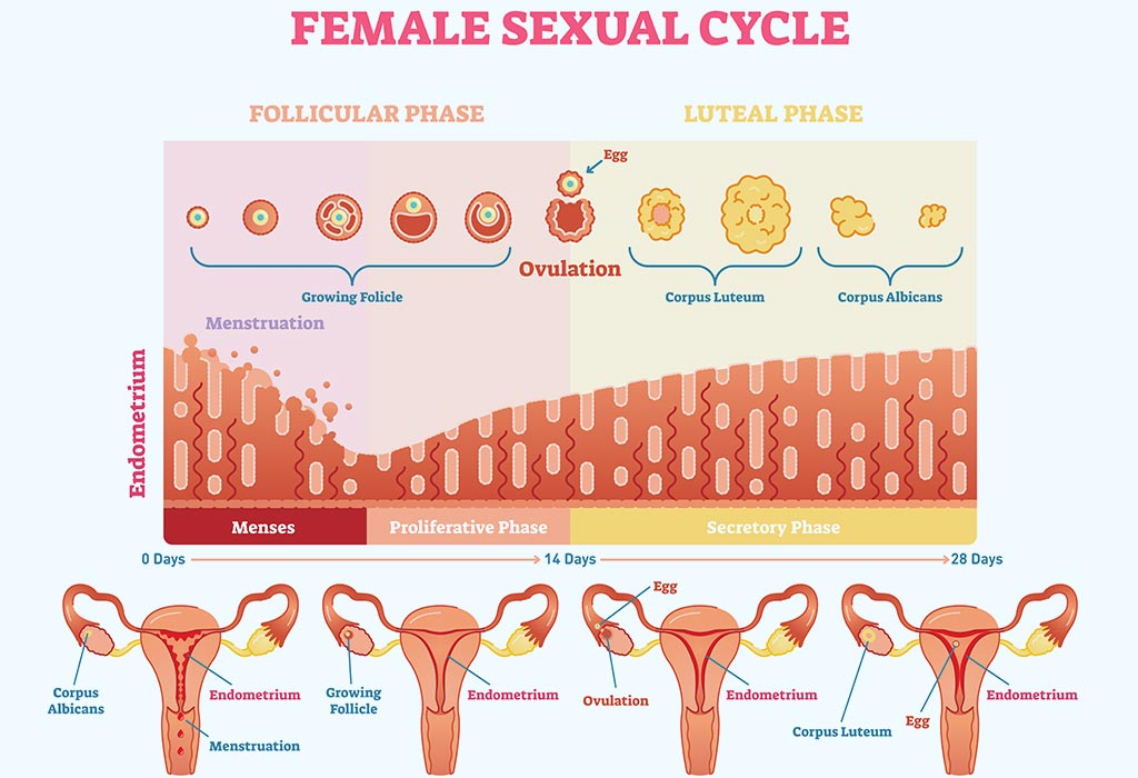 What Is Normal Endometrial Thickness For Pregnancy