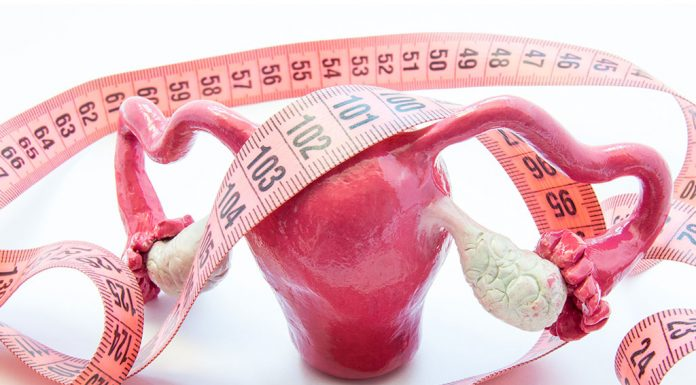 Anatomical model of ovaries and a measuring tape.