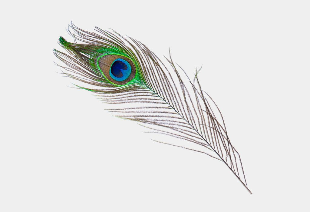 A peacock feather