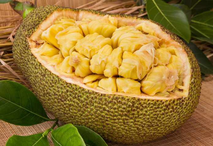 Eating Jackfruit during Pregnancy