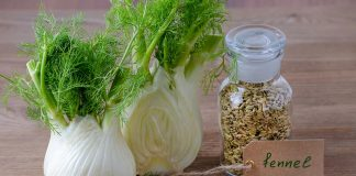 Fennel for Babies - Benefits, Precautions and Recipes
