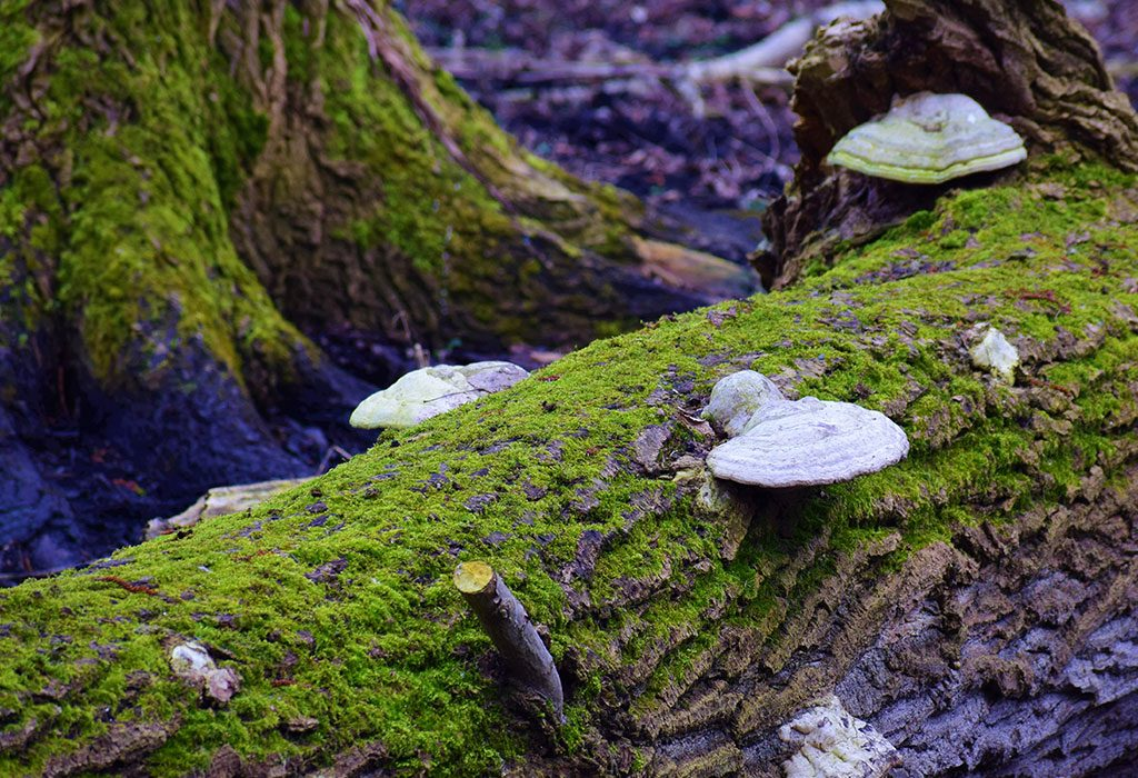 Algae and mushrooms