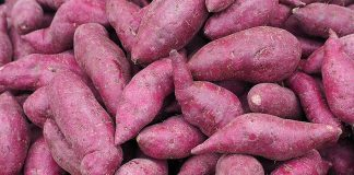 Eating Yams during Pregnancy