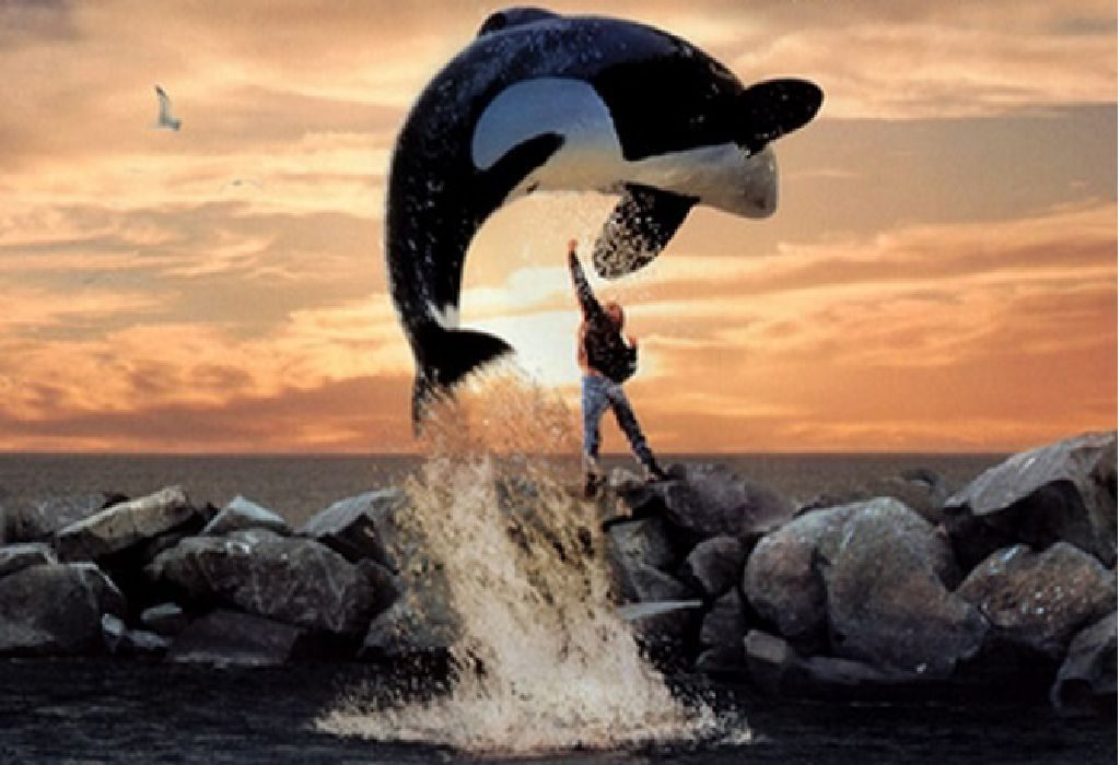 Willy is an orca whale that is trapped by whalers when he swims