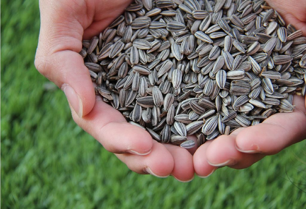 Roasted Lentils and Sunflower Seeds