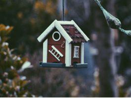 give your garden birds a pretty home