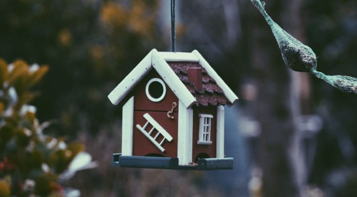 give your garden birds a pretty home