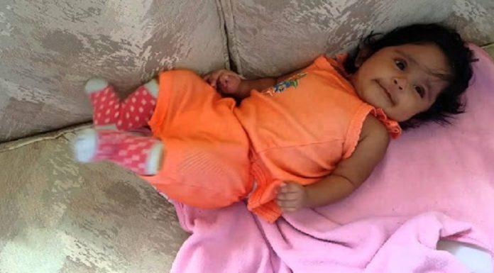 zika virus found in gujarat