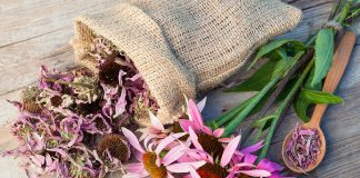 Is It Safe to Take Echinacea during Pregnancy?