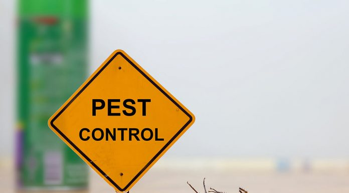 Pest Control with a Baby Around - How to Go for It
