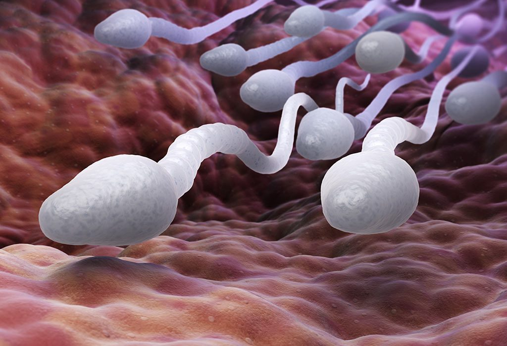 Fertility in men because of zinc