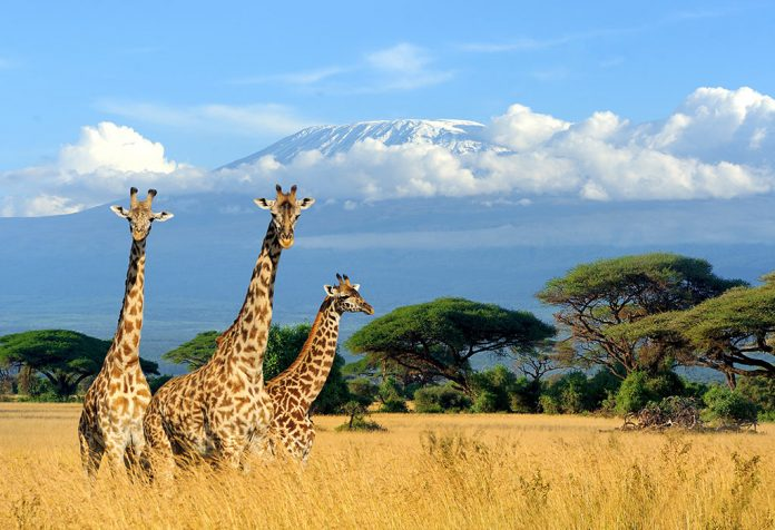 Interesting Facts About Giraffe for Kids