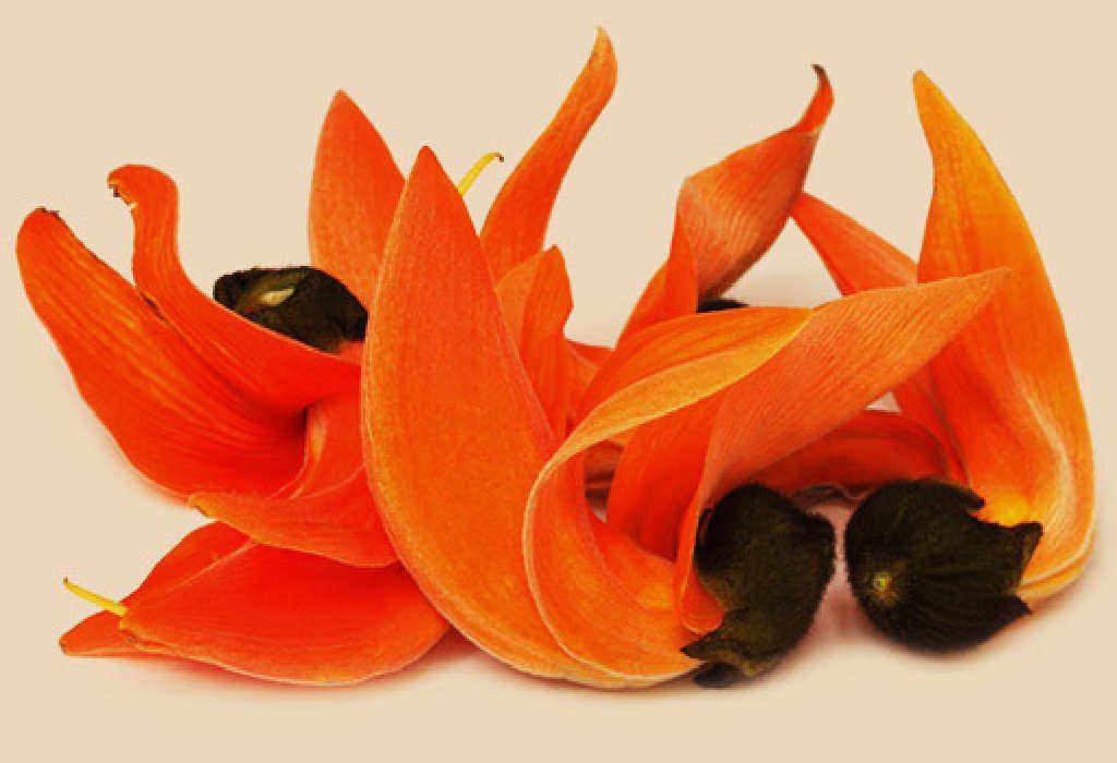 Beautiful Saffrons