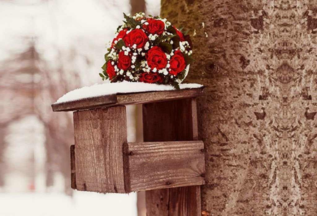 Build a bird-house in your yard