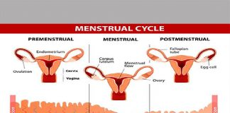 Six Tips to Know if you are Fertile