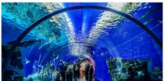 What you Must Do With Kids at the Aquarium