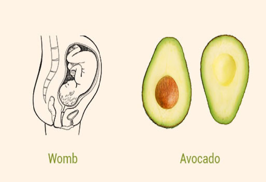 Avocado and Womb