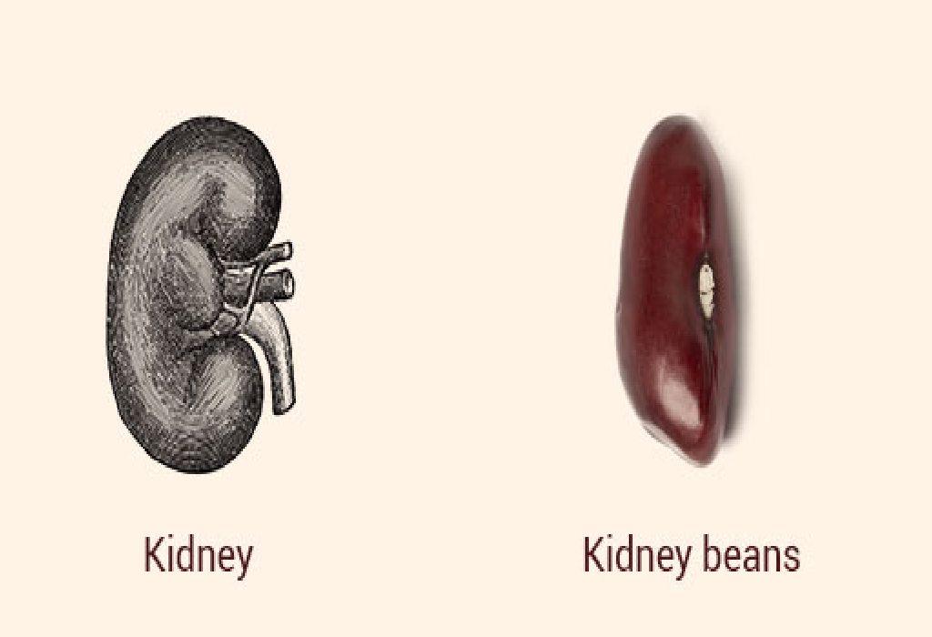 Kidney Beans and Kidneys