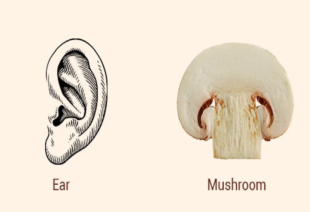 Mushrooms and Ears