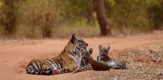 Fun Ways to Celebrate World Tiger Day with Kids