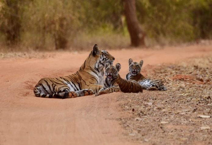 Fun Ways to Celebrate World Tiger Day with Kids
