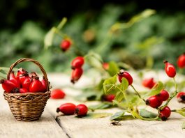 Rose Hip during Pregnancy - Benefits and Side Effects
