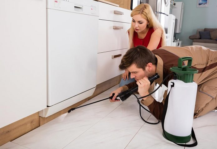 Having Pest Control during Pregnancy - Is It Harmful?