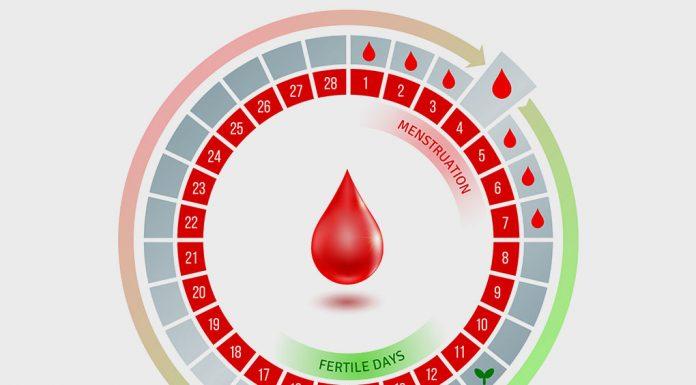 Understanding Your Fertile Window