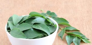 Eating Curry Leaves (Kadi Patta) during Pregnancy - Benefits & Precautions