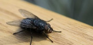 15 Ways to Get Rid of Flies in Your Home