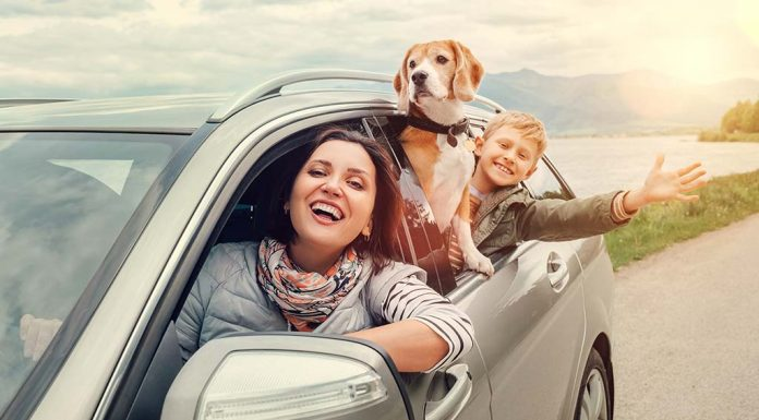 Travelling with Your Pet - Tips for a Hassle-free Journey