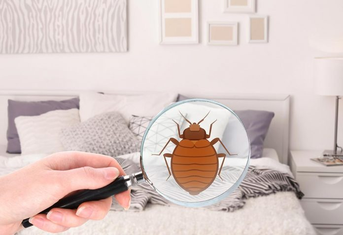 How to Get Rid of Bed Bugs at Home - Your Stepwise Guide