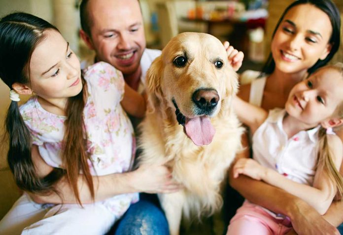 Essential Dog Care Tips to Keep Your Pet Healthy, Happy and Safe