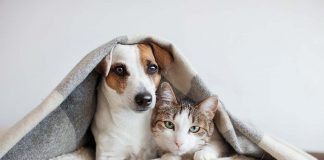 Pet Insurance - Secure Your Little Family Member